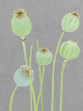 I133D - India & Purry - Poppy Pods on Grey