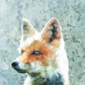 A357D - Ancello - Abstract Fox