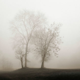 B2804D - Bell, Nicholas - Four Trees in Fog