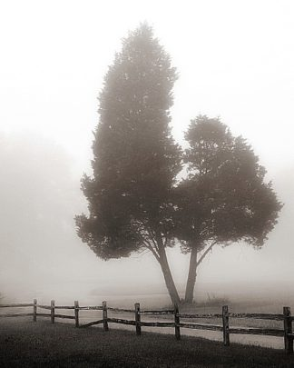 B2934D - Bell, Nicholas - Cedar Tree and Fence