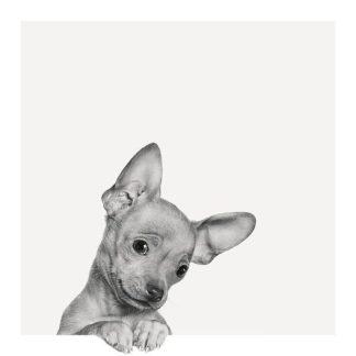 B3201D - Bertelli, Jon - Sweet Chihuahua