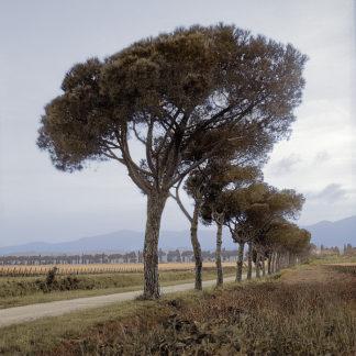 B3247D - Blaustein, Alan - Tuscan Fatorria Strada No. 1