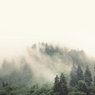 B3348D - Bell, Nicholas - Smoky Mountains