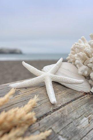 B3355D - Blaustein, Alan - Crescent Beach Shells 13