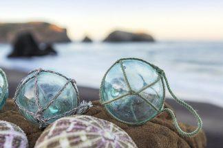 B3360D - Blaustein, Alan - Crescent Beach Shells 16