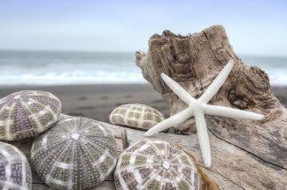 B3367D - Blaustein, Alan - Crescent Beach Shells 5