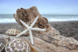 B3368D - Blaustein, Alan - Crescent Beach Shells 6