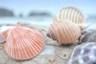 B3373D - Blaustein, Alan - Crescent Beach Shells 10