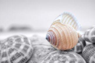 B3434D - Blaustein, Alan - Crescent Beach Shells 15