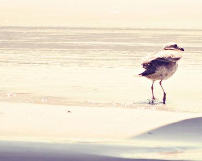 C1092D - Coomes, Sylvia - Bird at The Beach