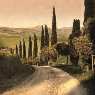 C534D - Carmel, Elizabeth - Country Lane, Tuscany