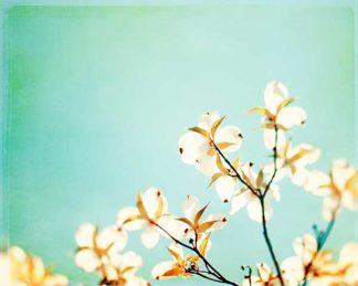 C921D - Cochrane, Carolyn - Blossoms Adrift