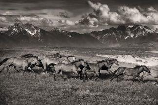 D1024D - Dearing, Lisa - Mountain Range Mavericks