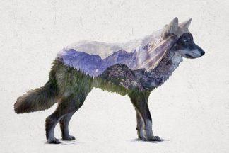 D941D - Davies Babies - Rocky Mountain Grey Wolf