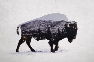 D942D - Davies Babies - The American Bison