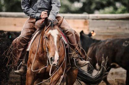 D973D - Dearing, Lisa - Cutting Horse