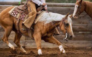 D975D - Dearing, Lisa - Cutting Horses