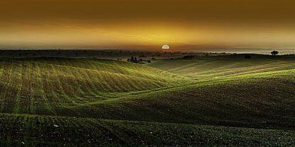 G650D - Gonçalves, Adelino - Alentejo Sunset