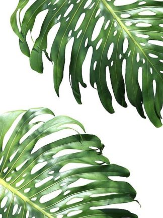 G837D - Greer, Lexie - Double Philodendron (color)