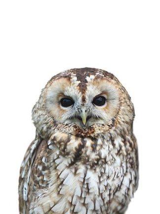 G840D - Greer, Lexie - Owl