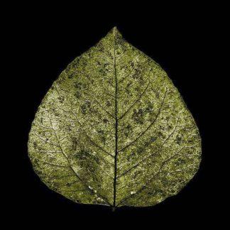 IN30276 - PhotoINC Studio - Green Leaf