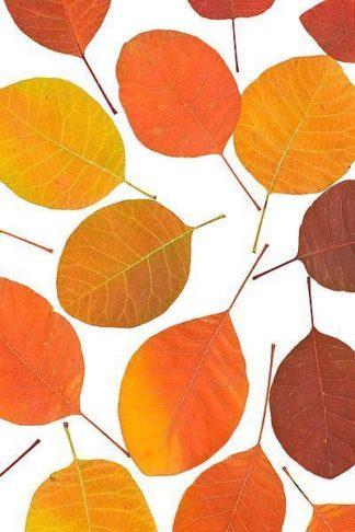 IN30279 - PhotoINC Studio - Brown Leaves