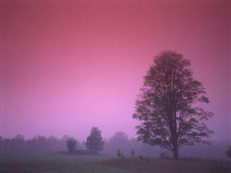 IN30848 - PhotoINC Studio - Evening Fields
