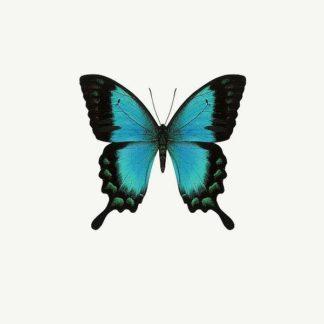 IN31298 - PhotoINC Studio - Blue Butterfly