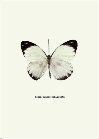 IN31888-1 - GraphINC - White Butterfly
