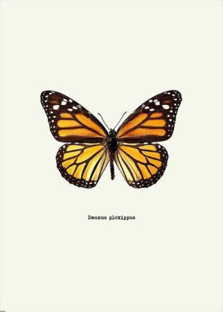 IN31888-2 - GraphINC - Yellow Butterfly