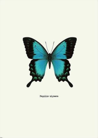 IN31888-3 - GraphINC - Blue Butterfly