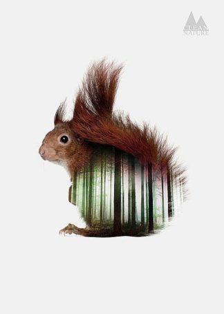IN32113 - Clean Nature - Squirrel