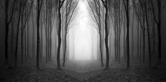 IN34042 - PhotoINC Studio - Dark Woods