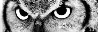 IN38005-1 - PhotoINC Studio - Owl