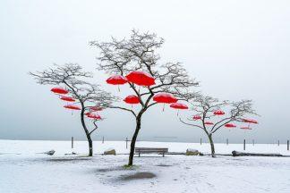 K2491D - Kostka, Vladimir - Red Umbrellas