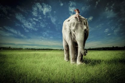 M1203D - Madison, Jeff - Elephant Carry Me