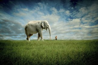 M1204D - Madison, Jeff - Elephant Follow Me