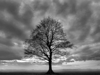 P921D - PhotoINC Studio - Great Tree