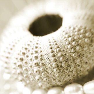 P945D - PhotoINC Studio - Shells and Pearls 2