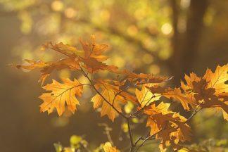 R1115D - Raimond, Roeselien - Autumn Light