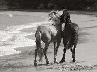 S1249D - Scott, Traer - Young Mustangs on Beach