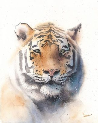 S1465D - Sweet, Eric - Tiger