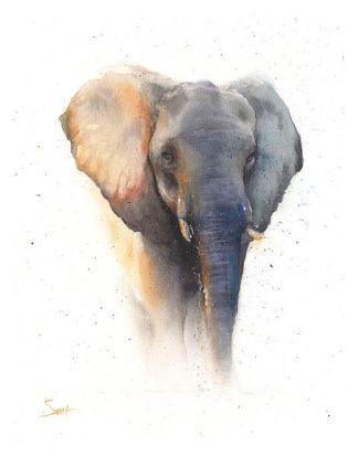 S1469D - Sweet, Eric - Elephant Watercolor