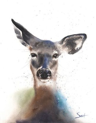 S1470D - Sweet, Eric - Deer Watercolor
