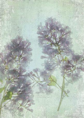 S1512D - Stalus, Judy - Lilac
