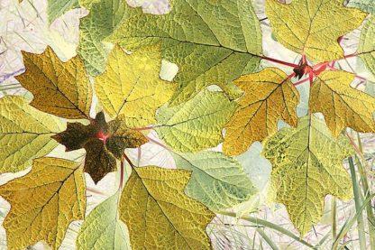 S1514D - Stalus, Judy - Golden Oak