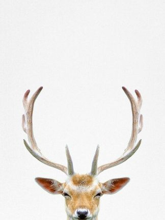 T526D - Tai Prints - Deer