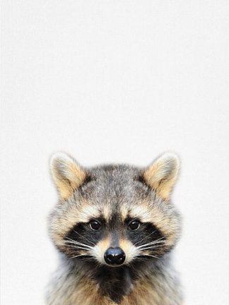T535D - Tai Prints - Raccoon