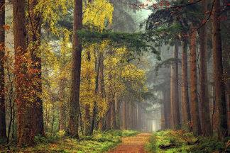 V515D - Van de Goor, Lars - Colors of the Forest