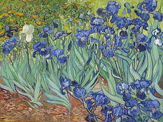 V550D - Van Gogh, Vincent - Irises, 1889
